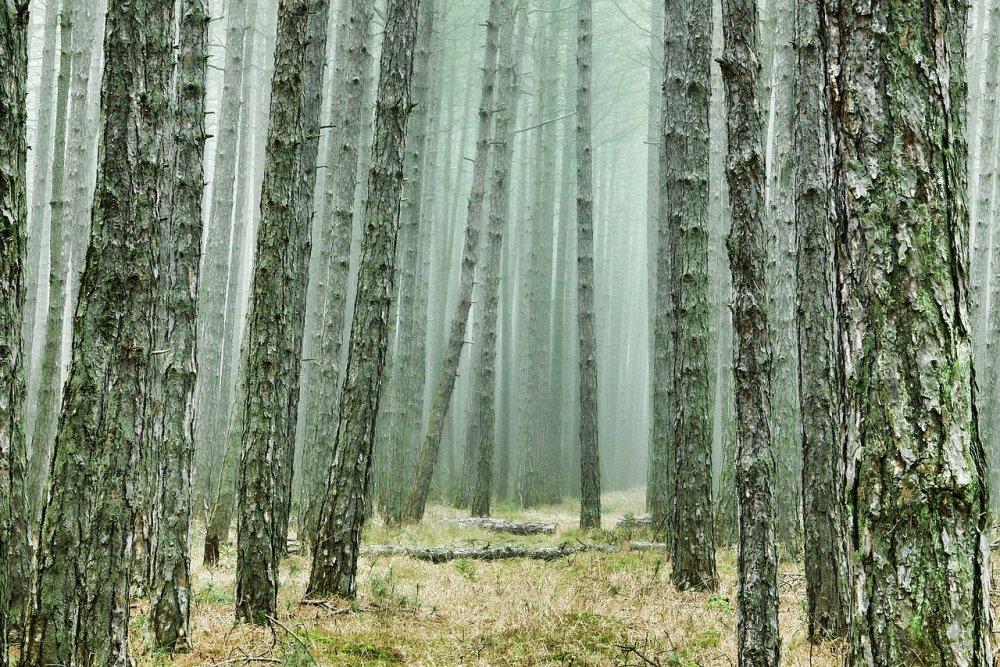 «Сосновый» cад в Краснодаре благоустроят за 172 млн рублей
